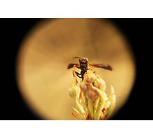 Wasp and Flower Bud Macro III Photographic Print