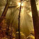 Mist and granite boulders, Mount Buffalo by Kevin McGennan