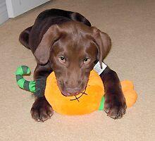 Leo 12 weeks old by Jen Peters