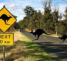 Kangaroos Ahead by Paul Earl