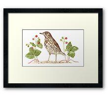 Song Thrush and Wild Strawberries Framed Print