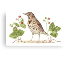Song Thrush and Wild Strawberries Canvas Print