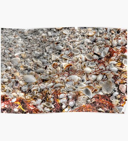 Blanket of Shells on Sanibel Island Beach in Florida Poster