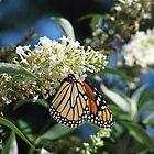 Butterfly Bush by JeffeeArt4u