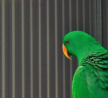 Pensive Parrot by chijude