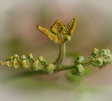 Bracken ~ Fern by M.S. Photography/Art