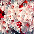 Hey, little Cherry Blossom by Manisch