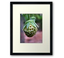 Unripe Strawberry Framed Print