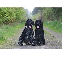 Connor and Quinn - Large Munsterlanders Photographic Print