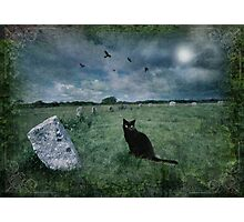 Cornish Black Cat Photographic Print