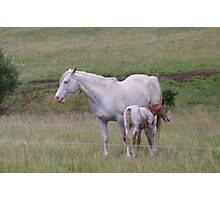 mum and her foal  Photographic Print