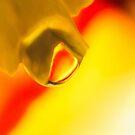Agate Sunrise by Kenneth Haley