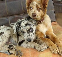 TWO SPOTTIE PUPPIES! by Helen Akerstrom Photography