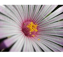 Fan Flower Photographic Print