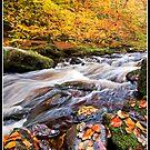 Autumn falls by Shaun Whiteman