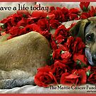 The Mattie Cancer Fund 1 by Samitha Hess Edwards