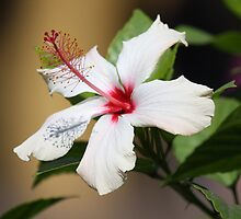Tropical Flowers by mgramley