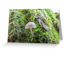 Tiny on a Willow Tree Greeting Card