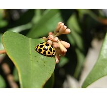 bug III Photographic Print