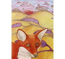 Foxy Fields Photographic Print