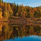 autumn reflections by Fraser Ross