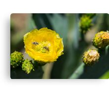 Buzzing About Canvas Print