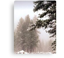 Snow covered Tree 1 Canvas Print