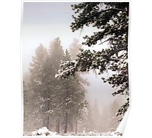Snow covered Tree 1 Poster