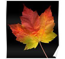 Large Maple Leaf Poster