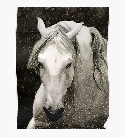Andalusian Horse Portrait Poster