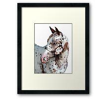 Appaloosa Yearling Horse Portrait Framed Print