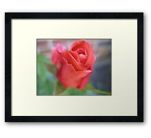 the Soft Touch Rose Framed Print