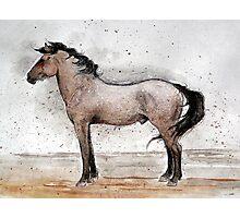 Mustang Horse Portrait Photographic Print