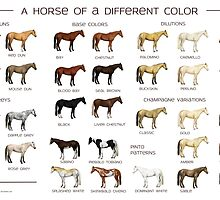 Horse Colors Poster by Sarah Slater