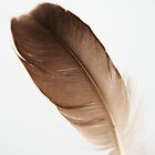 Brown Feather by Rita Ballantyne