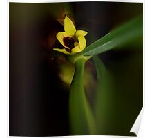 'picture perfect' Orchid 21 Poster
