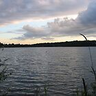 Sunset at Greenlake  by Kelley Shannon