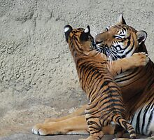 Hugs for Mamma by Kathy Newton