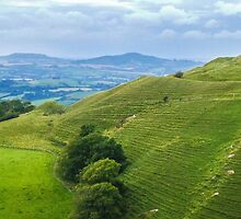 Eggardon Hill, Dorset UK by Pauline Tims