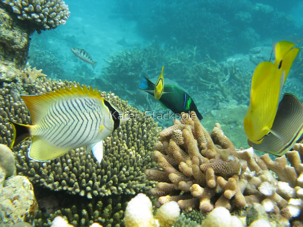 Barrier Reef fish - Under the water, snorkling by Karen Stackpole