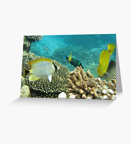 Barrier Reef fish - Under the water, snorkling - Queensland Greeting Card