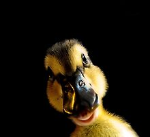 Just Ducky! by Jan  Tribe