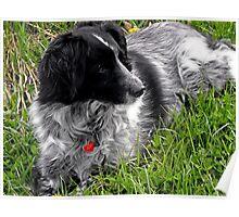 Springtime Companion Poster