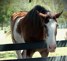 Horse by Jill Bernier