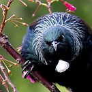 Tui - This is my patch - keep out........! by Roy  Massicks
