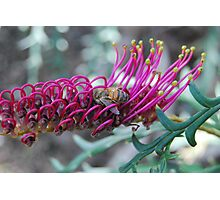 Bee In The Loop Photographic Print