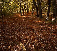 Autumn Delight by Brendan Schoon