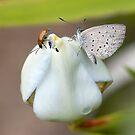 Bugs on Bud by Ann  Palframan