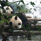 panda-monium in China. by elphonline