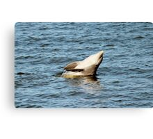 Dolphin Clapping  Canvas Print